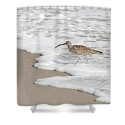Whimbrel Wading Shower Curtain