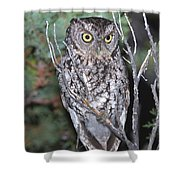 Whiskered Screech Owl Shower Curtain