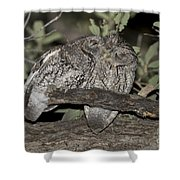 Whiskered Screech Owls Shower Curtain