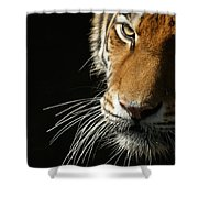 Whiskers Shower Curtain