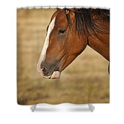 Whiskey 2 Shower Curtain