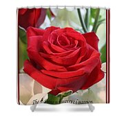 Whispers Of Passion And Love Red Rose Greeting Card  Shower Curtain