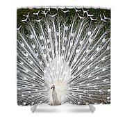 Whit Peacock Shower Curtain