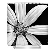 White And Black Flower Close Up Shower Curtain
