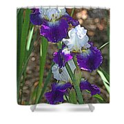 White And Blue Iris Stalks At Boyce Thompson Arboretum Shower Curtain