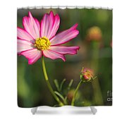 White And Magenta Cosmos Shower Curtain