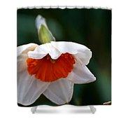 White And Orange Daffodil Shower Curtain