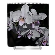 White And Pale Pink Phalaenopsis  165 Shower Curtain