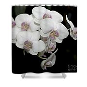 White And Pale Pink Phalaenopsis   9920 Shower Curtain