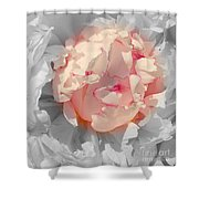 White And Pink Lace Shower Curtain