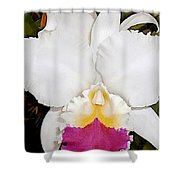White And Purple Cattleya Orchid Shower Curtain