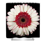 White And Red Gerbera Daisy Shower Curtain