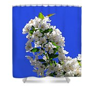 White And Wonderful Shower Curtain by Elizabeth Dow