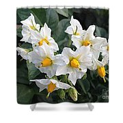 Garden Blossoms White And Yellow Garden Blossoms Shower Curtain