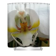 White And Yellow Orchid Shower Curtain