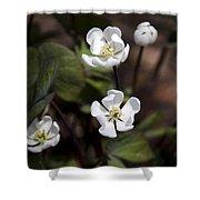 White Anemone Flowers Shower Curtain