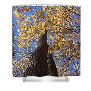 White Ash Shower Curtain