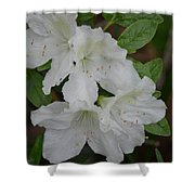 White Azalea 14-1 Shower Curtain