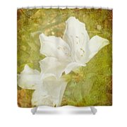 White Azalea Shower Curtain