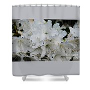 White Azaleas In Bermuda Shower Curtain