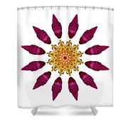 Beach Rose Iv Flower Mandala White Shower Curtain