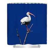 White Beauty Against Blue Shower Curtain