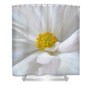 White Begonia Flower Macro Shower Curtain