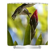 White-bellied Emerald Shower Curtain