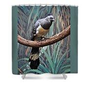 White-bellied Go-away-bird Shower Curtain
