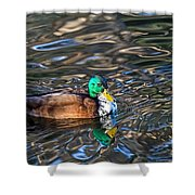 White-bibbed Mallard Shower Curtain