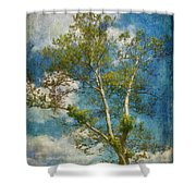White Birch In May Shower Curtain