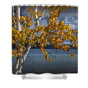 White Birch Tree In Autumn Along The Shore Of Crystal Lake Shower Curtain