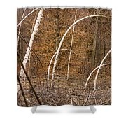White Birch Trees In The Brown And Orange Forest Shower Curtain