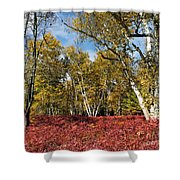 White Birches Of Fall Shower Curtain