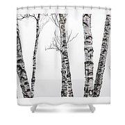 White Birches Shower Curtain