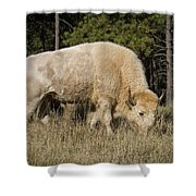 White Bison Symbol Of Hope And Renewal Shower Curtain