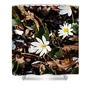 White Bloodroot Shower Curtain