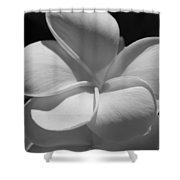 White Bloom B W Shower Curtain