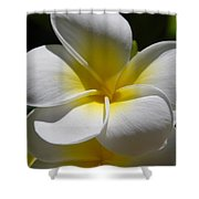 White Bloom Shower Curtain