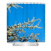White Blossoms Blue Sky Shower Curtain
