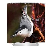 White-breasted Nuthatch - Classic Pose Shower Curtain