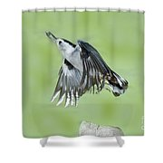White-breasted Nuthatch Flying With Food Shower Curtain