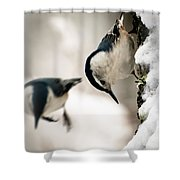 White Breasted Nuthatch In The Snow Shower Curtain by Bob Orsillo