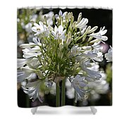 White Bright Agapanthus Shower Curtain