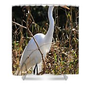 White Brilliance Of The Egret Shower Curtain