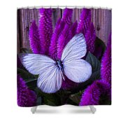 White Butterfly On Flowering Celosia Shower Curtain