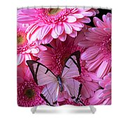 White Butterfly On Pink Gerbera Daisies Shower Curtain