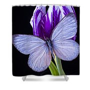White Butterfly On Purple Tulip Shower Curtain