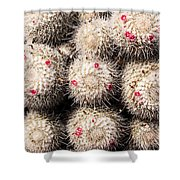 White Cactus Pink Flowers No1 Shower Curtain
