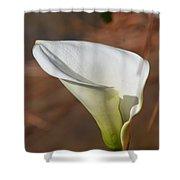 White Calla Lily Shower Curtain